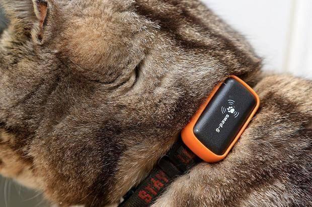 GPS Trackers till hund/katt